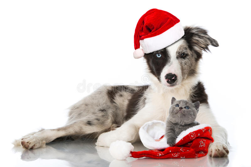 Christmas cat and dog. Isolated on white royalty free stock photo