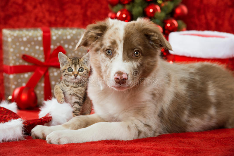 Christmas cat and dog. Kitten and puppy on christmas decoration royalty free stock images