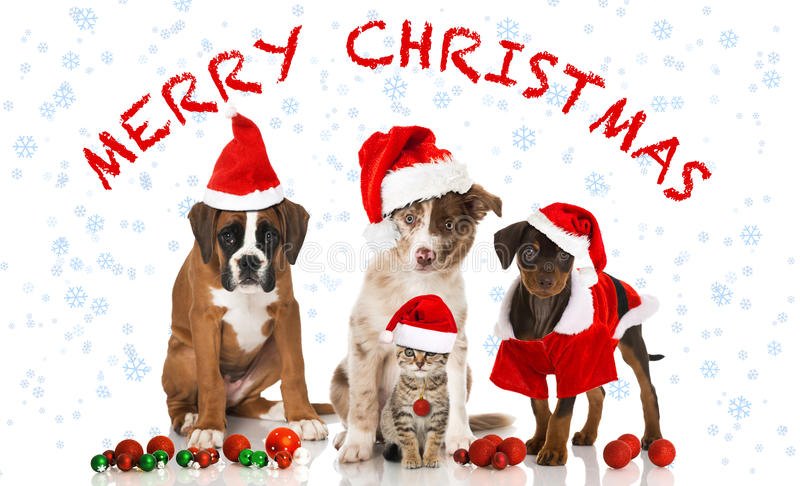 Christmas cat and dogs. Isolated on white stock photos