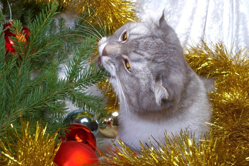 Christmas cat among a fur-tree stock photos