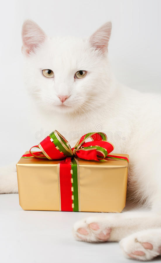 Download Christmas cat gift stock photo. Image of christmas, winter - 22409590
