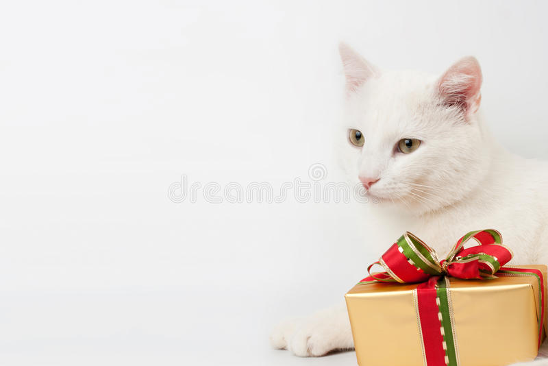 Download Christmas cat gift stock photo. Image of sparkle, xmas - 22409594