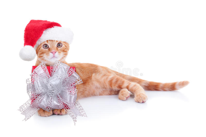 Christmas Cat Gift. Christmas Santa kitten cat with gift presents stock photography