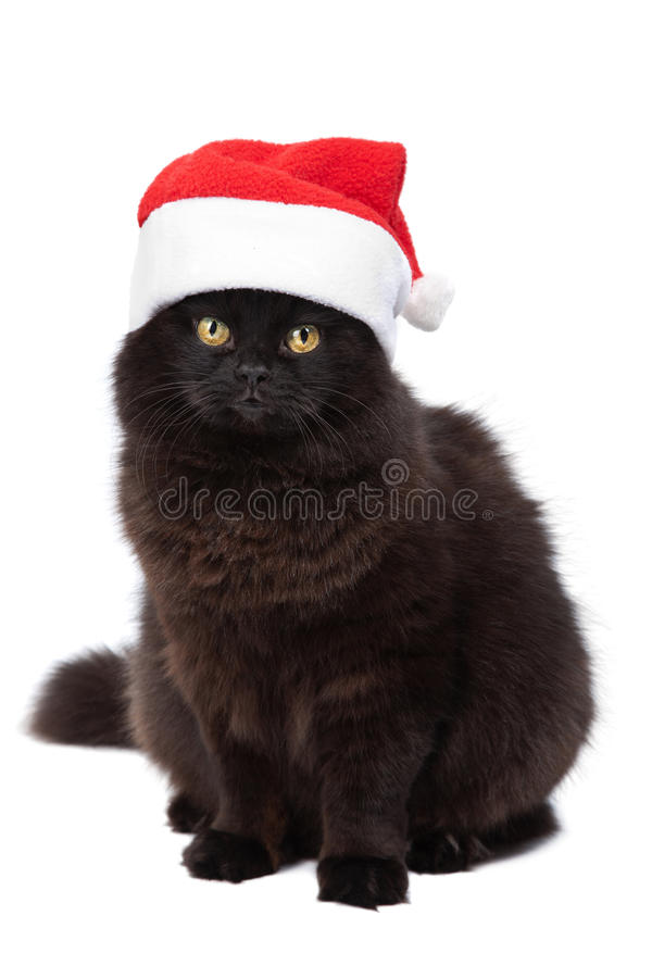 Christmas cat isolated. Over white royalty free stock photo