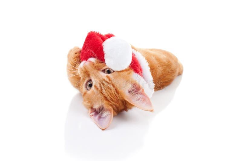 Christmas Cat. Playful Christmas kitten cat and Santa hat royalty free stock image