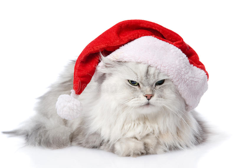 Christmas cat in red Santa Claus cap. Isolated on a white backgro royalty free stock images