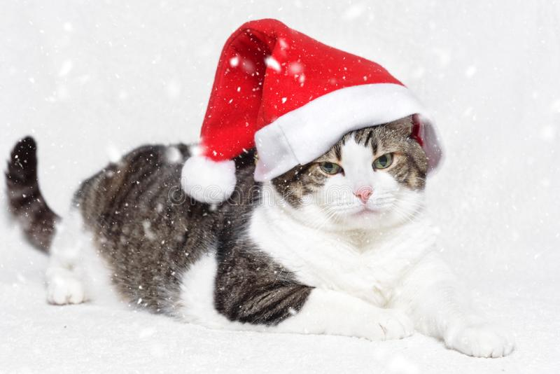 Christmas cat in red Santa Claus hat and snow flakes on white background royalty free stock photo