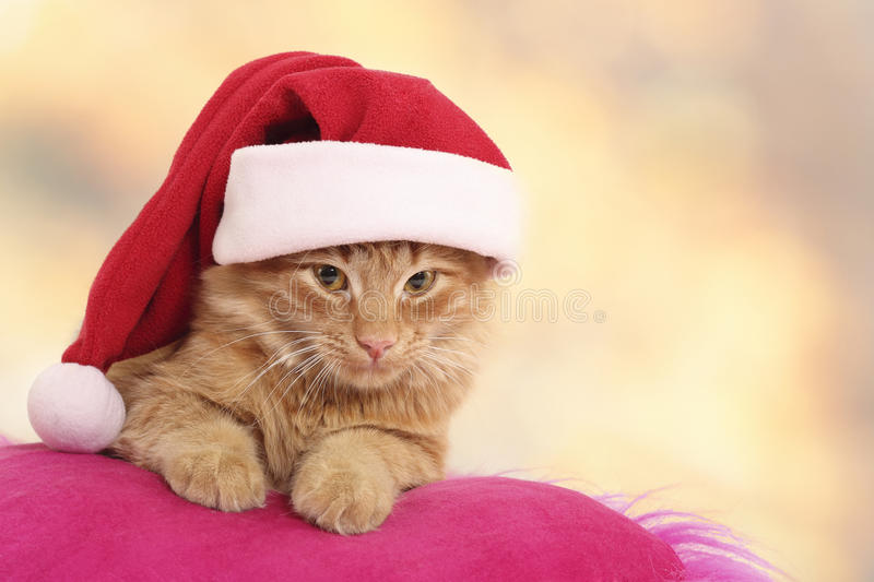 Christmas cat relax on pillow. Isolated on light background royalty free stock images