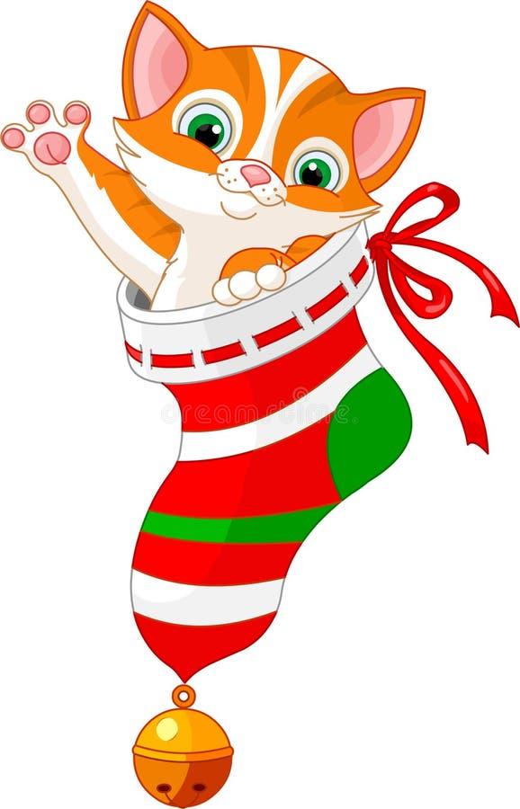 Christmas cat in sock. Christmas cute cat in gift sock