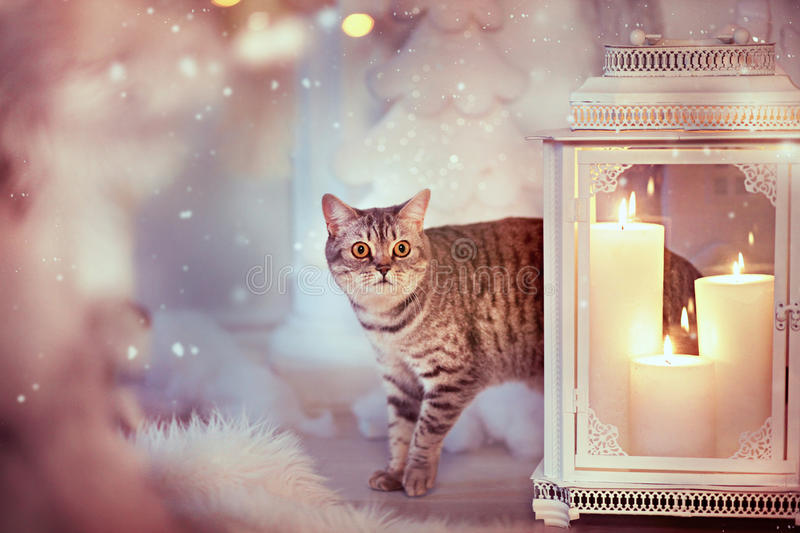 Christmas cat. Christmas. Cat standing near the fireplace royalty free stock images