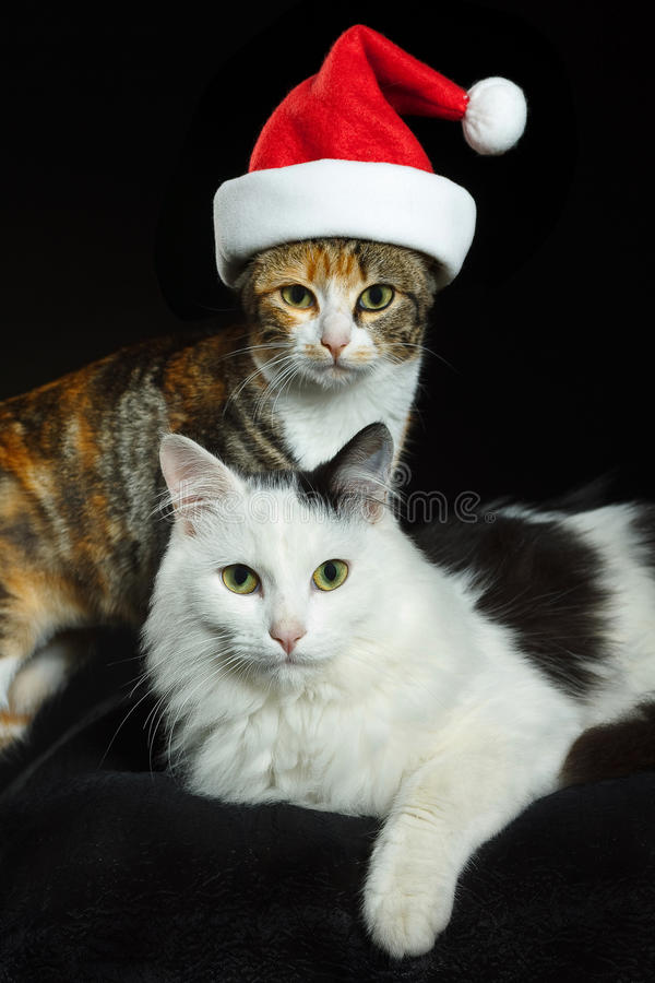 Cats with Santa cap stock images