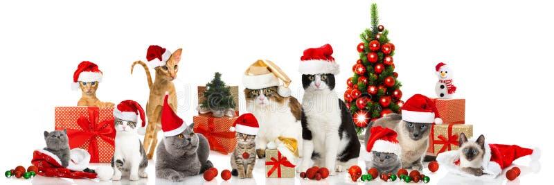 Christmas cats stock image