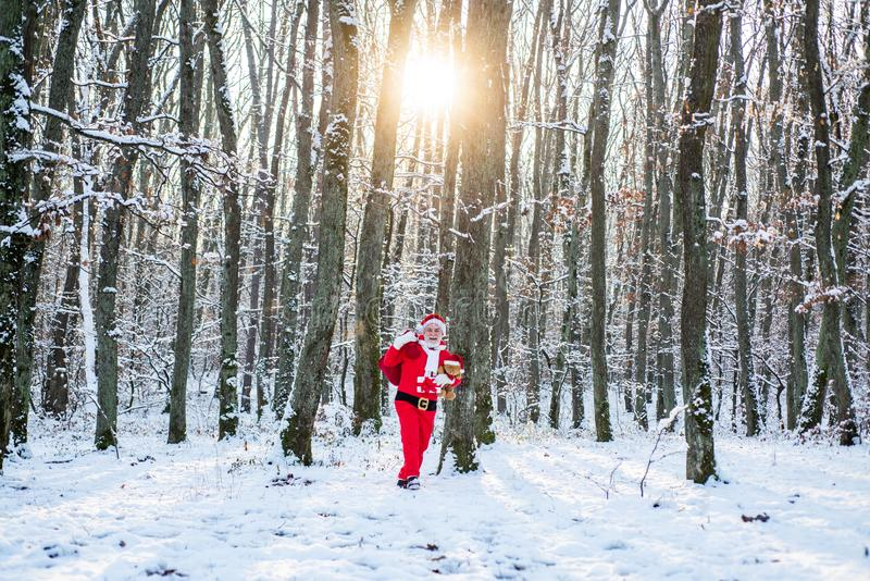 Christmas Celebration holiday. Santa in the winter field. Santa Claus in red costume walk in winter forest. Winter park. Trees covered with snow stock images