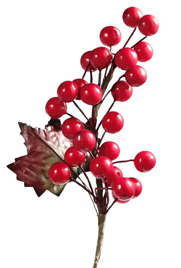 Christmas Cherry. A Christmas tree cherry plant decoration stock photo
