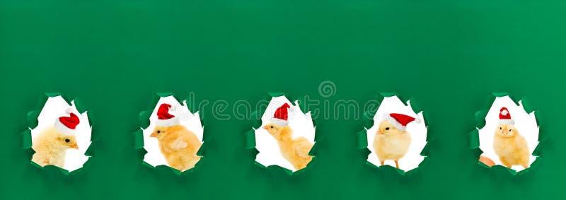 Download Christmas Chicken Portraits Stock Image - Image of comic, adorable: 35477415