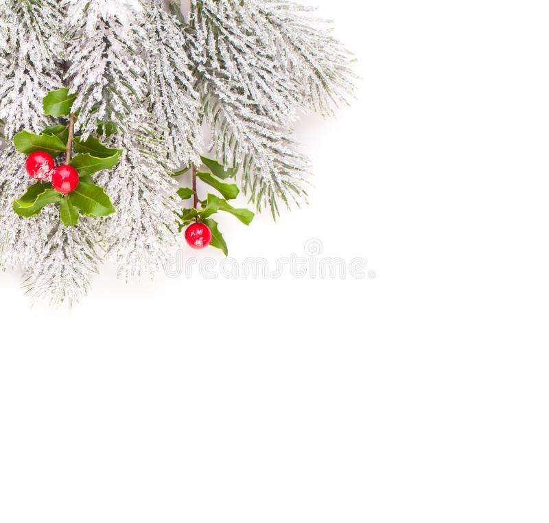 Christmas composition border with green frozen fir branch and holly red berries and leaves isolated on white background stock photo