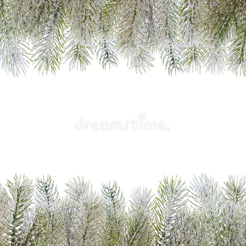 Christmas composition border. Xmas green winter fir branch on white.  stock images