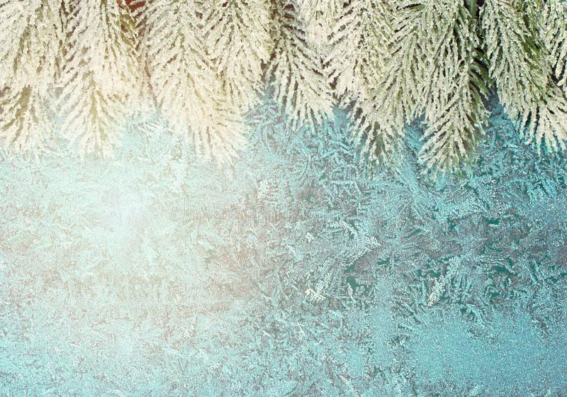 Christmas composition border with Xmas tree branch and frost on frozen winter window.  stock images