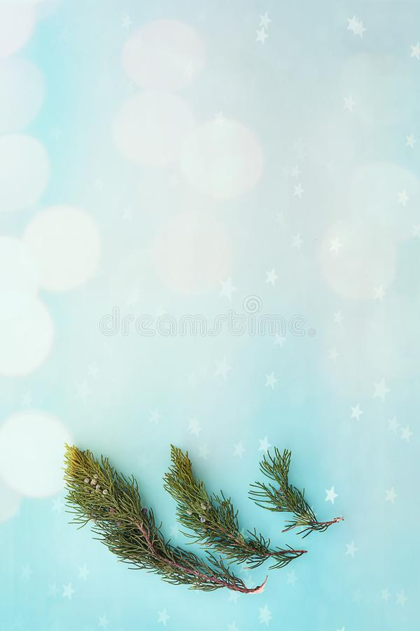 Christmas composition. South thuja branches on a light vertical green background with highlights and bokeh. New Year concept. Christmas composition. South thuja royalty free stock photography