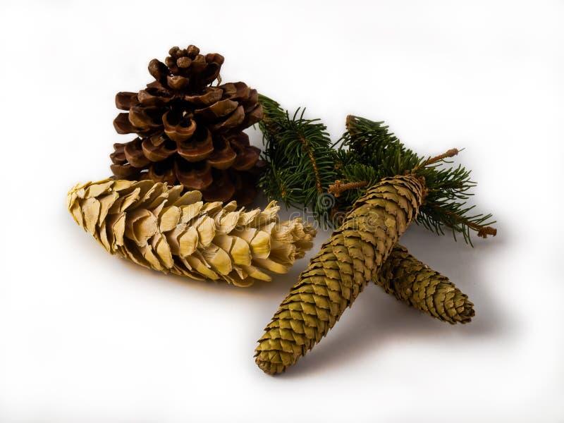Christmas Cones Royalty Free Stock Photo
