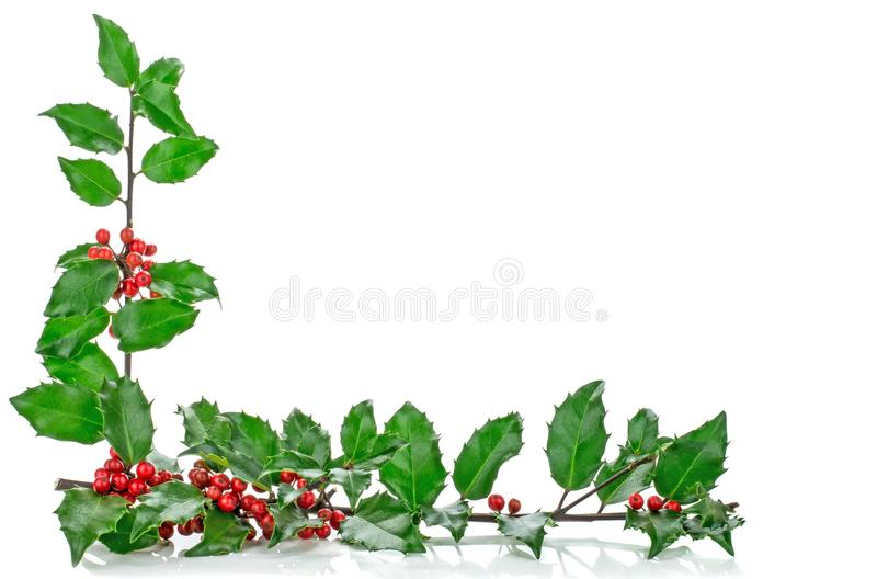 A Christmas corner border frame. With holly on white background royalty free stock image