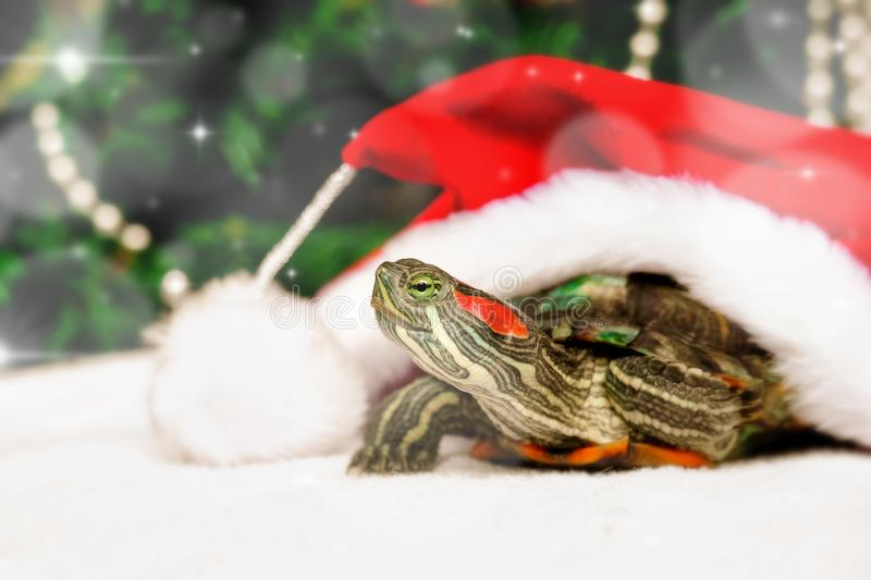 Christmas creative card with turtle in red santa claus hat. New Year decorations on backround. Free space for text stock photo