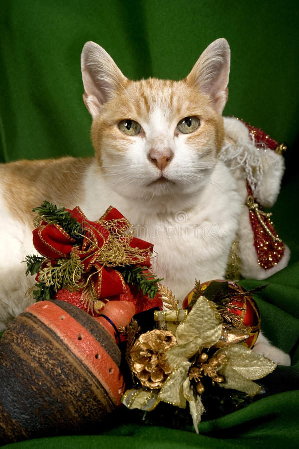 Download Christmas decoration stock photo. Image of animals, vertical - 27962062