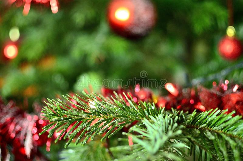 Close-up of Green pine branch with artificial snow stock images