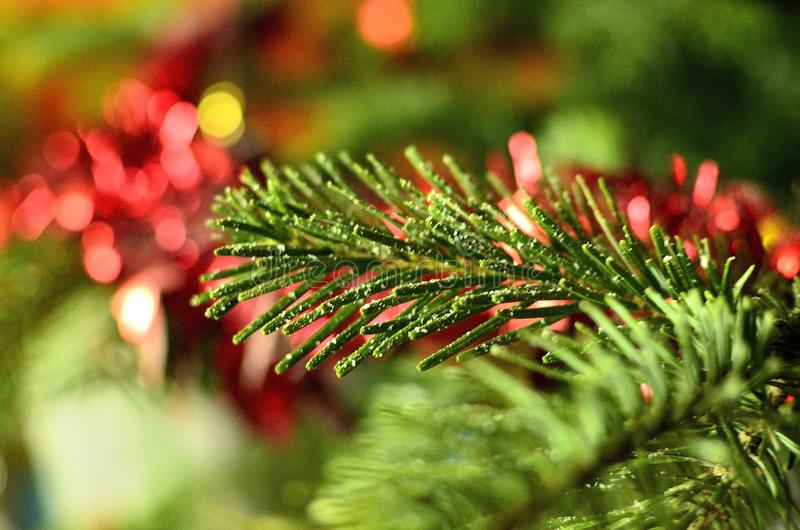 Close-up of Green pine branch with artificial snow royalty free stock image