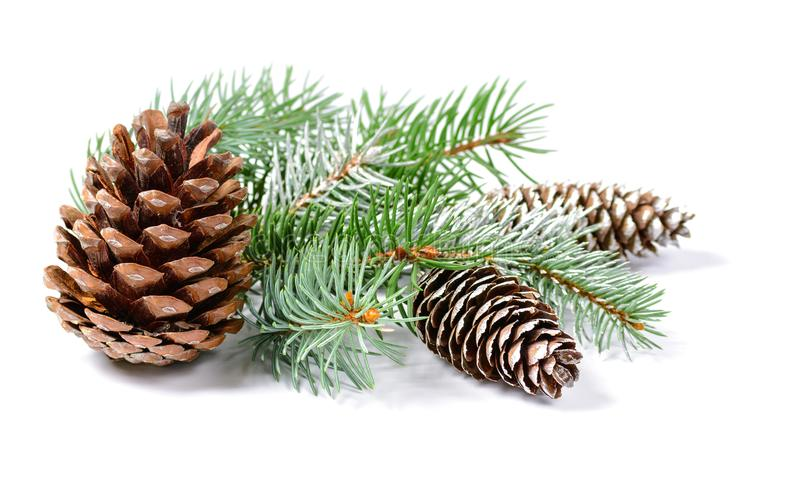 Christmas decoration with fir tree and cones isolated on a white background stock photo