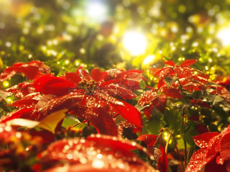 Christmas gold balls with light royalty free stock photography