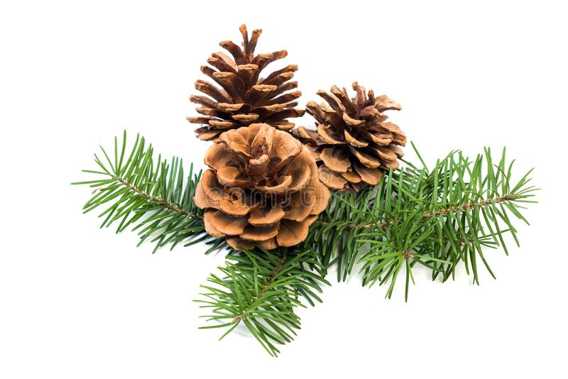 Christmas decoration pine cone bauble and fir tree branches royalty free stock photo