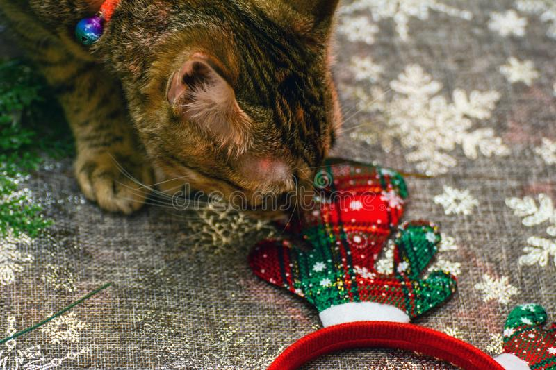 Christmas kitty decorations. Christmas decorations along with a tabby kitty playing with them stock photography