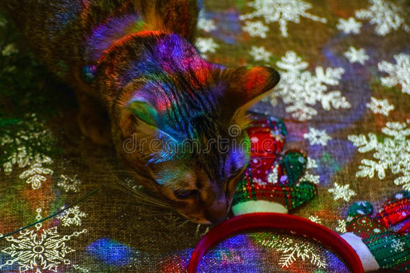 Christmas kitty decorations. Christmas decorations along with a tabby kitty playing with them stock images