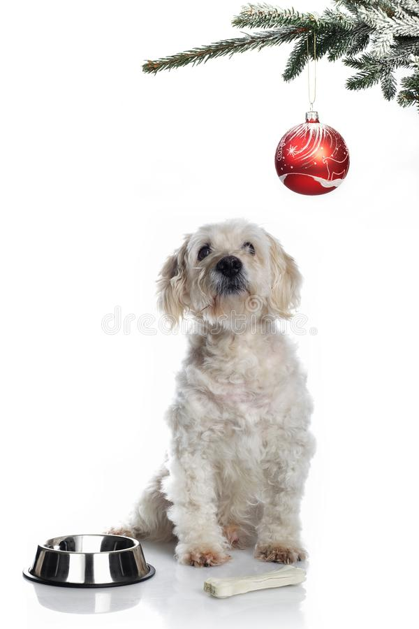 Christmas dog stock photos