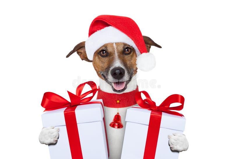 Christmas dog. Santa christmas dog with gifts stock photo