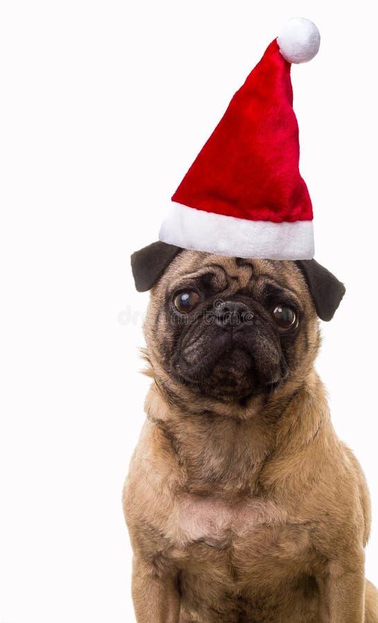 Download Christmas Dog stock photo. Image of puppy, brown, seasonal - 27373790