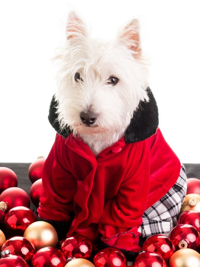 Download Christmas Dog Stock Photo - Image: 27571230