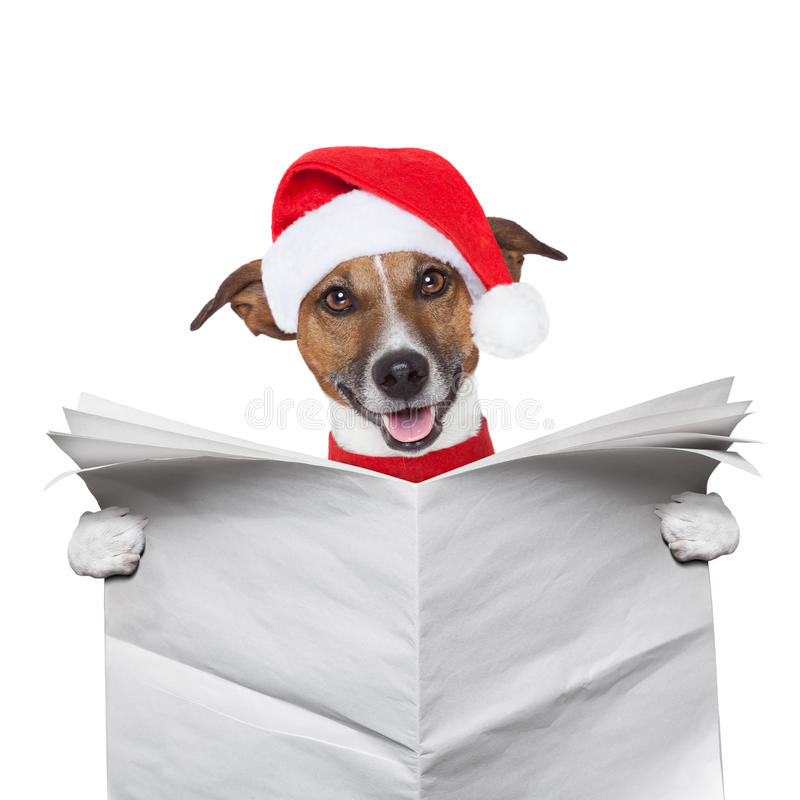 Christmas dog. Reading a newspaper stock images