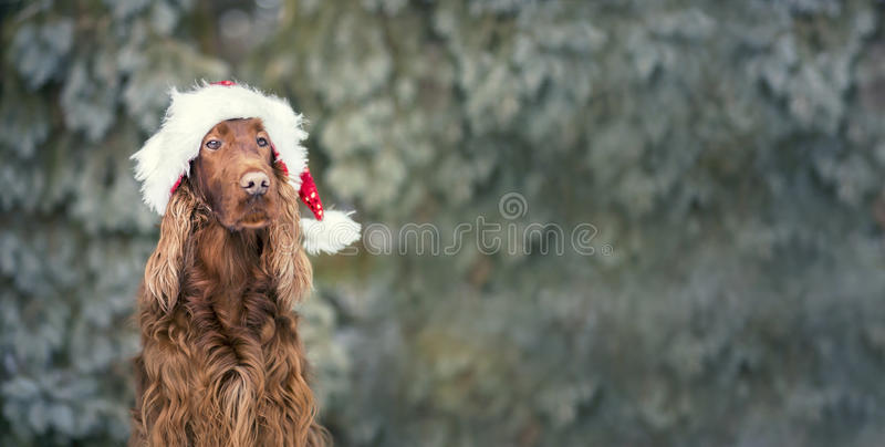 Christmas dog banner. Website banner of a Christmas dog with Santa Claus hat royalty free stock image