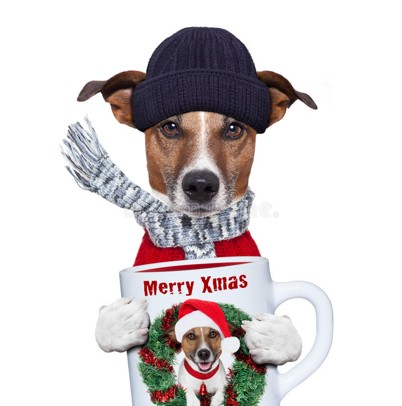 Christmas dog with cup stock photo