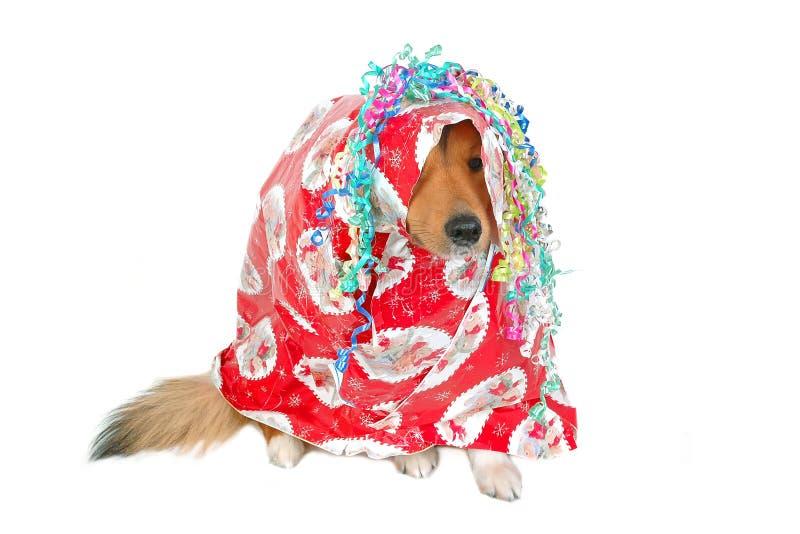 Christmas dog gift stock photos