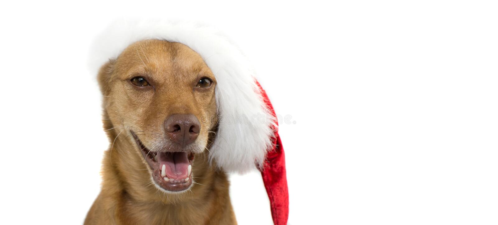 CHRISTMAS DOG HAT BANNER. ISOLATED ON WHITE BACKGROUND WITH COPY stock images