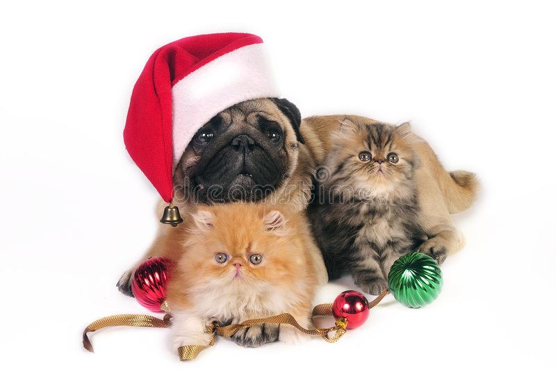 Christmas dog and kittens. royalty free stock photos