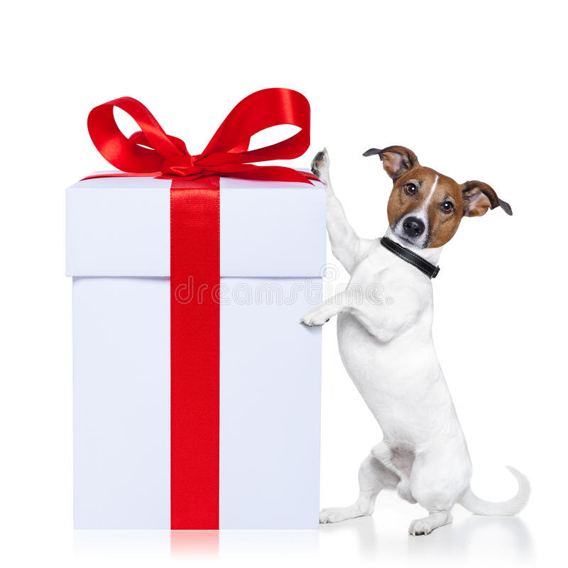Christmas dog with present royalty free stock photo