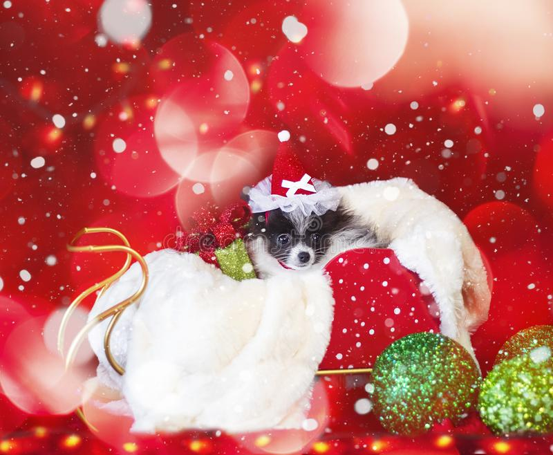 Christmas Dog, Puppy in Santa Hat with bokeh background royalty free stock photo