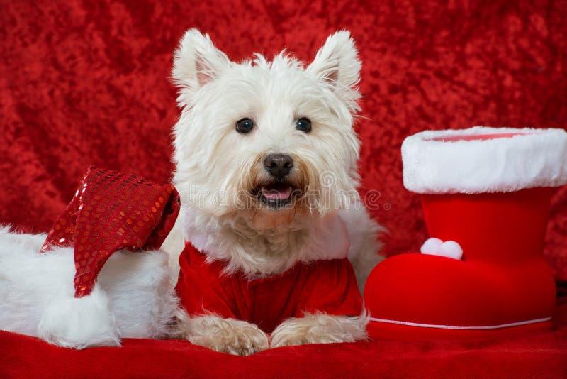 Christmas dog. On red christmas decoration royalty free stock photography