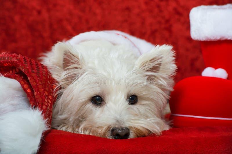 Christmas dog. On red christmas decoration stock image