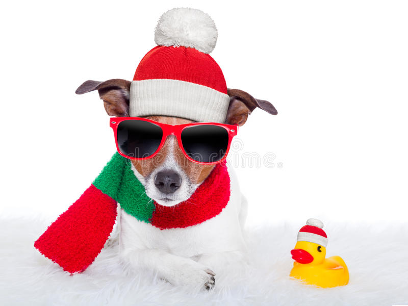 Christmas dog. Resting on a white carpet and a rubber duck stock photos