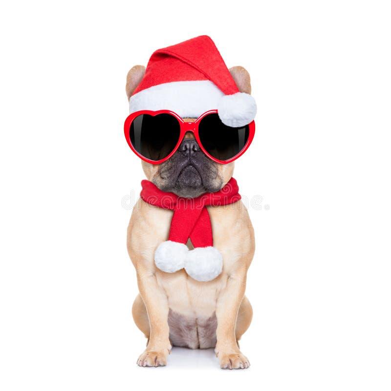 Christmas dog. Santa claus christmas fawn bulldog dog wearing read heart shaped glasses , isolated on white background stock photo